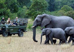 Kruger Park - Afrique du Sud